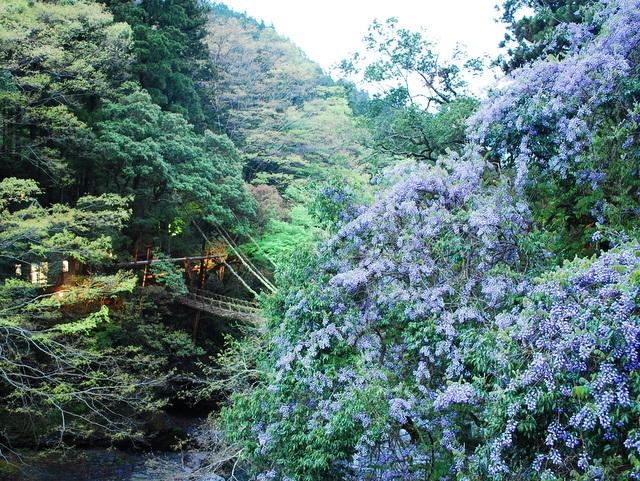 https://www.oboke-iya.jp/kawaraban/DSC_0316.JPG